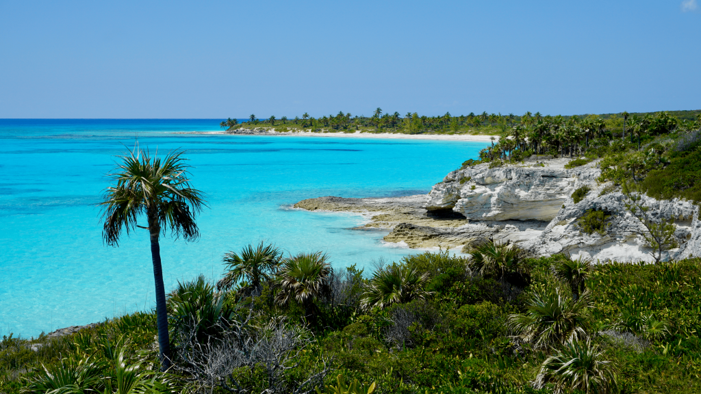 A picture of a palm tree, rock formations, and light blue ocean water from Lighthouse Point, Eleuthera Bahamas
